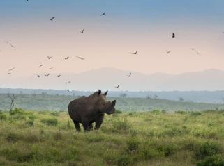 South Africa, Travel, Safari, Sabi Sands, Kruger National Park