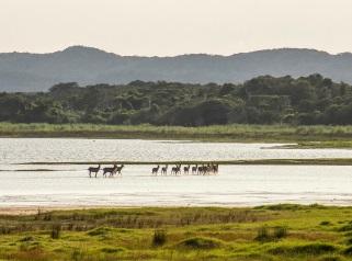 South Africa, Travel, Safari, Phinda, iSimangaliso Wetlands Park, KwaZulu-Natal