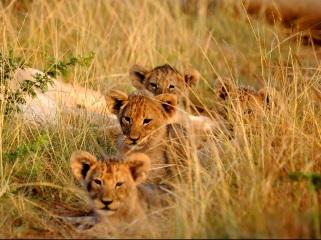 Kariega Reserve, Eastern Cape, Addo, South Africa, Travel