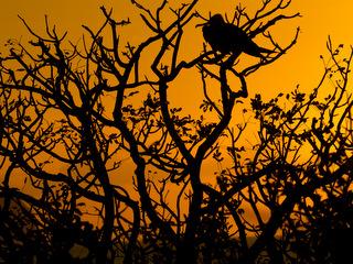 Galapagos Island sunset