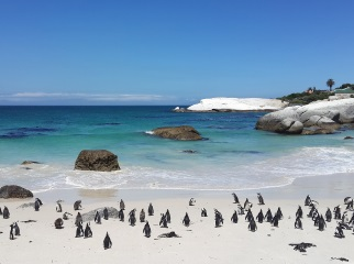 Cape Town, Cape Peninsula, Penguins, South Africa, Travel
